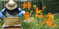蜂蜜専門店