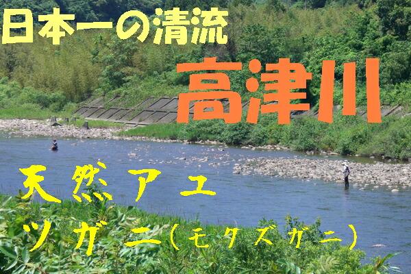 高津川の鮎漁
