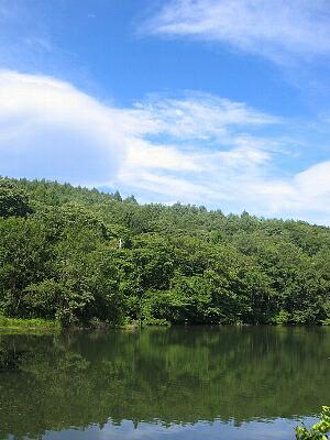 森林イメージ2