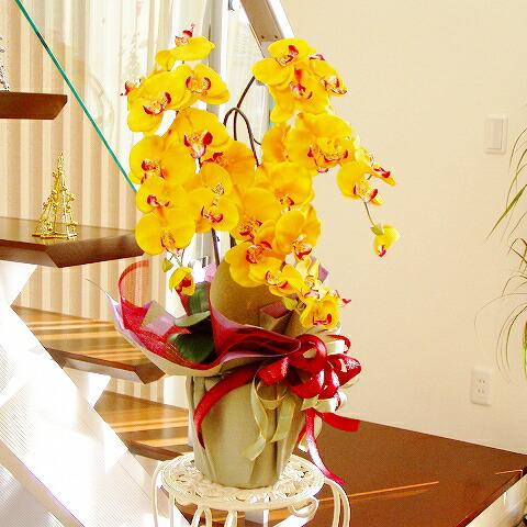 優雅で高貴な胡蝶蘭の鉢植