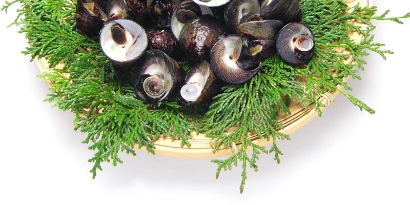 かごに盛った500gのシッタカ貝