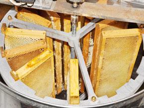 日本蜜蜂のはちみつも遠心分離機を用いた西洋式の養蜂で行います。巣を潰す古来の方式で採蜜したものと比べるとすっきりとした味わいの蜂蜜が採れます。