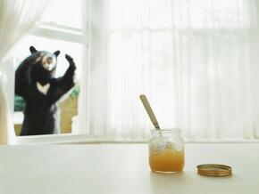 熊も大好き!吉田養蜂場のおいし~い国産蜂蜜♪