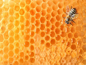 ミツバチと蜂の巣
