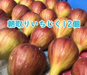 いちじくフェスタ13