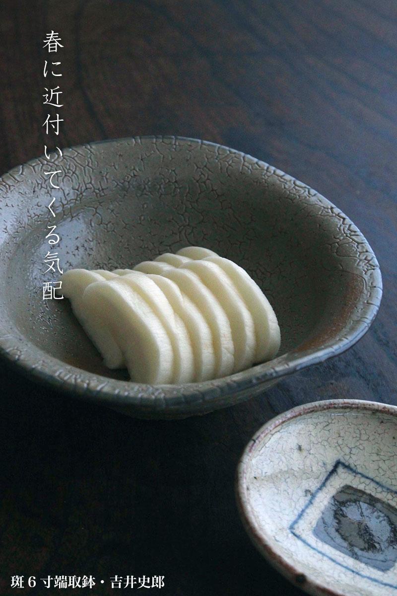 斑6寸端取鉢・吉井史郎