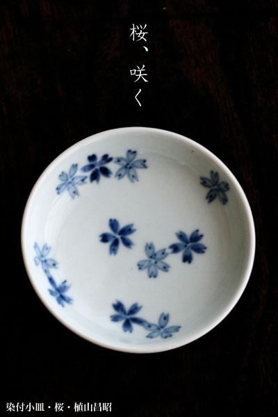 染付小皿・桜