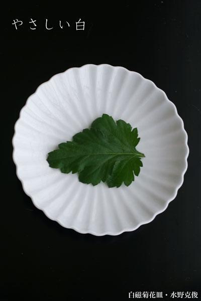 白磁菊花皿・水野克俊
