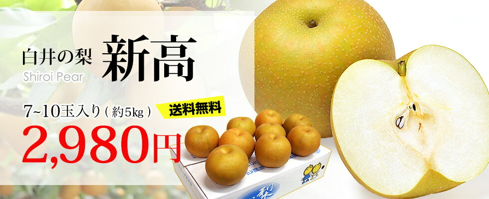 白井の梨|新高