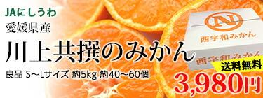 川上共選のみかん S〜L