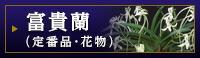 富貴蘭(定番品・花物)
