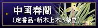 中国春蘭(定番品・新木上木3条立)