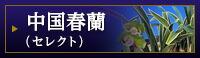 中国春蘭(セレクト)