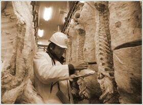 最高の品質は全てここから牛枝肉市場からの「自社による一頭買い付け」