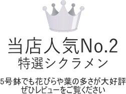 当店人気No.2シクラメン5号鉢