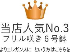 当店人気No.3フリル咲き6号鉢