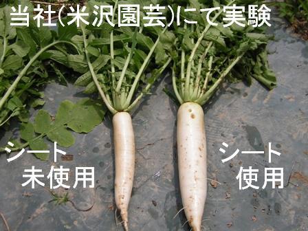 大根の生育実験