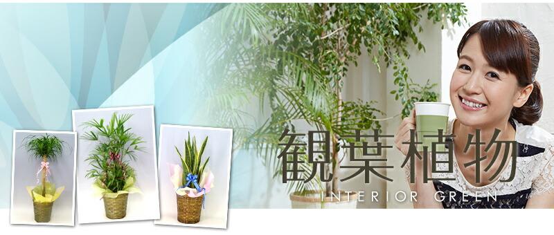あるとちょっっぴりリラ〜ックス♪特選観葉植物。