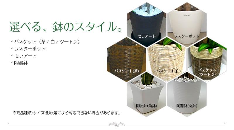 様々な鉢スタイルをご用意