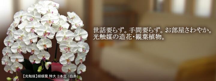 光触媒の造花・観葉植物