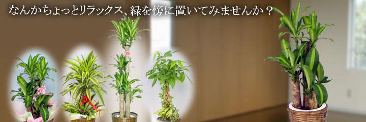 スズキラン園の観葉植物