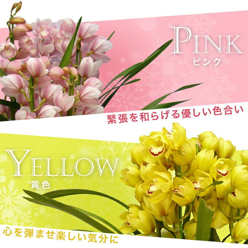 ピンク・黄色