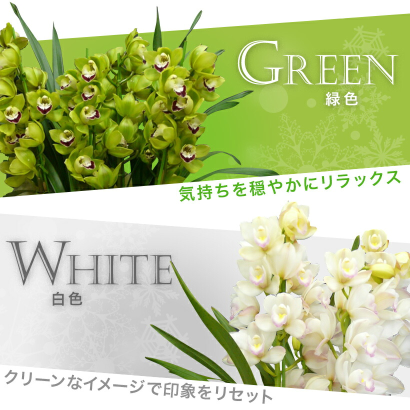 緑・ホワイト