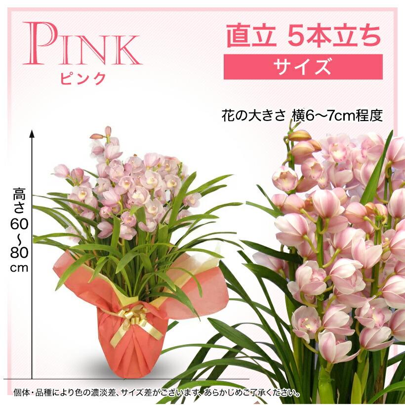 サイズ:ピンク