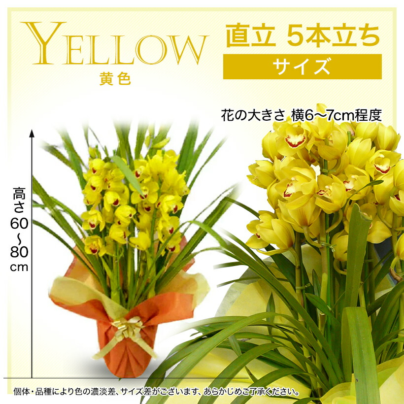 サイズ:黄