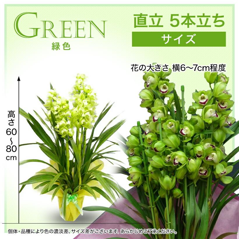 サイズ:緑