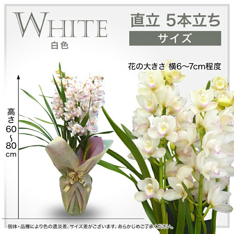 サイズ:白