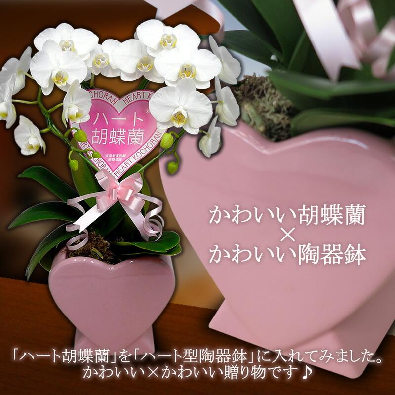 ハート胡蝶蘭 ミディタイプ 白 シングルハート ハート型陶器鉢
