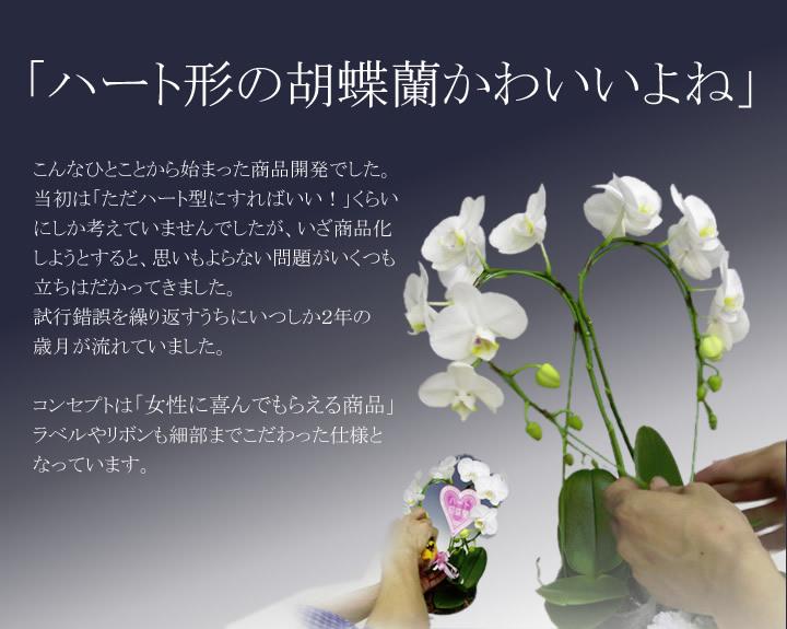 ハート胡蝶蘭はかわいです。