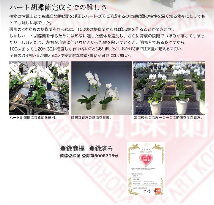 ハート胡蝶蘭は作成に手間がかかります。商標登録 登録済み