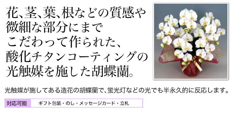 根っこや葉っぱまで本物そっくり、酸化チタンコーティングの光触媒胡蝶蘭
