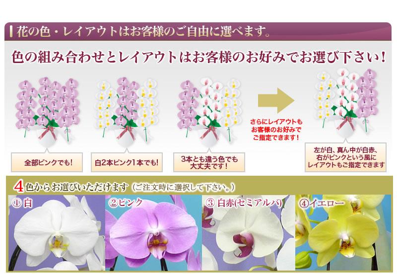 花の色・レイアウトは自由自在!