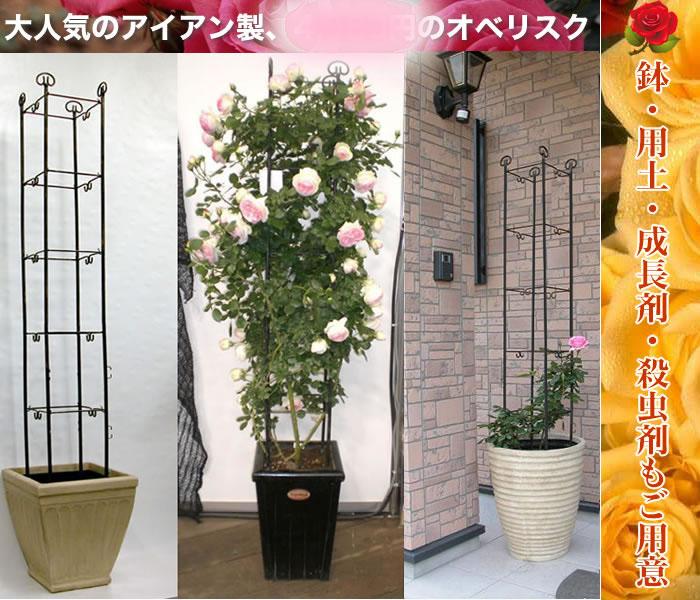 バラ オベリスク オベリスクの鉢植えをまきまきの巻