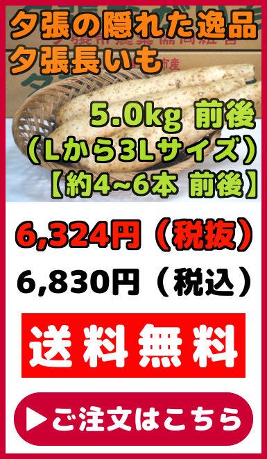 夕張長いも 5kg 前後 約4本から6本 前後 Lサイズから3Lサイズ ながいも ナガイモ 長芋