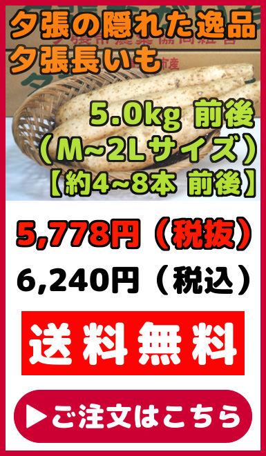 夕張長いも 5kg 前後  約4本から8本 前後 Mサイズから2Lサイズ ながいも ナガイモ 長芋