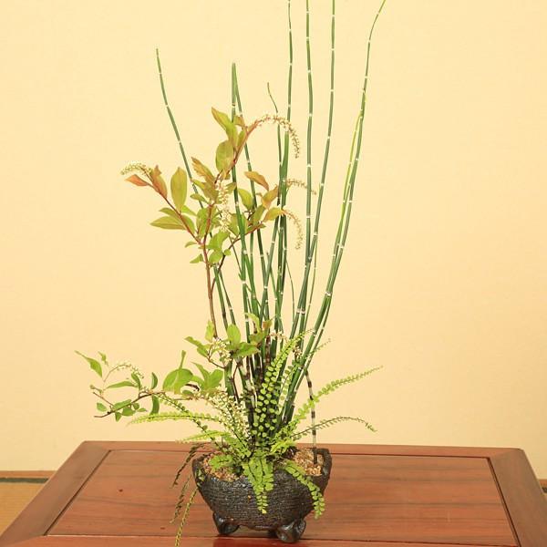 トクサ寄せ植え(信楽焼鉢)