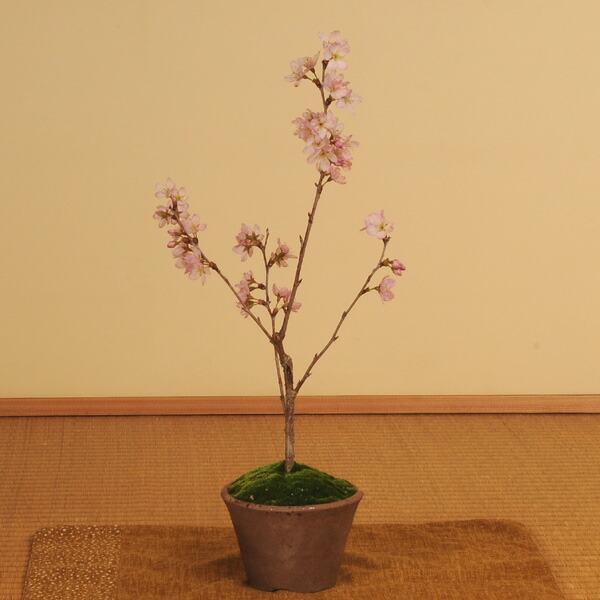 ミニ盆栽:啓翁桜(瀬戸焼小鉢)