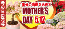 母の日開花