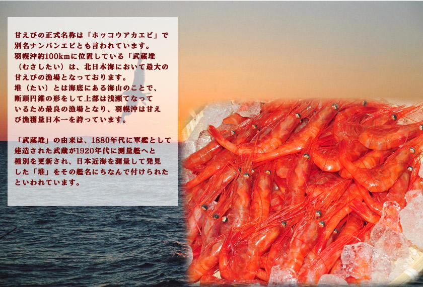 甘えびの正式名称は「ホッコウアカエビ」で別名ナンバンエビとも言われています。羽幌沖約100kmに位置している「武蔵堆むさしたい)は、北日本海において最大の甘えびの漁場となっております。堆(たい)とは海底にある海山のことで、断頭円錐の形をして上部は浅瀬てなっているため最良の漁場となり、羽幌沖は甘えび漁獲量日本一を誇っています。「武蔵堆」の由来は、1880年代に軍艦として建造された武蔵が1920年代に測量艦へと種別を更新され、日本近海を測量して発見した「堆」をその艦名にちなんで付けられたといわれています。