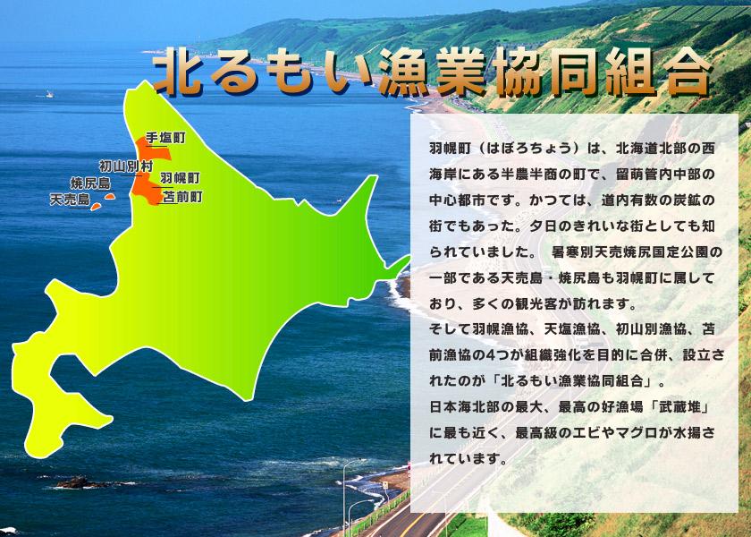 羽幌町(はぼろちょう)は、北海道北部の西海岸にある半農半商の町で、留萌管内中部の中心都市です。かつては、道内有数の炭鉱の街でもあった。夕日のきれいな街としても知られていました。暑寒別天売焼尻国定公園の一部である天売島・焼尻島も羽幌町に属しており、多くの観光客が訪れます。そして羽幌漁協、天塩漁協、初山別漁協、苫前漁協の4つが組織強化を目的に合併、設立されたのが「北るもい漁業協同組合」。日本海北部の最大、最高の好漁場「武蔵堆」に最も近く、最高級のエビやマグロが水揚されています。